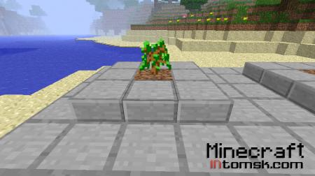 Как выростить большое, красивое дерево.