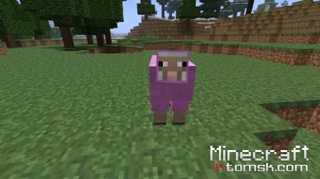 Разноцетная овца.